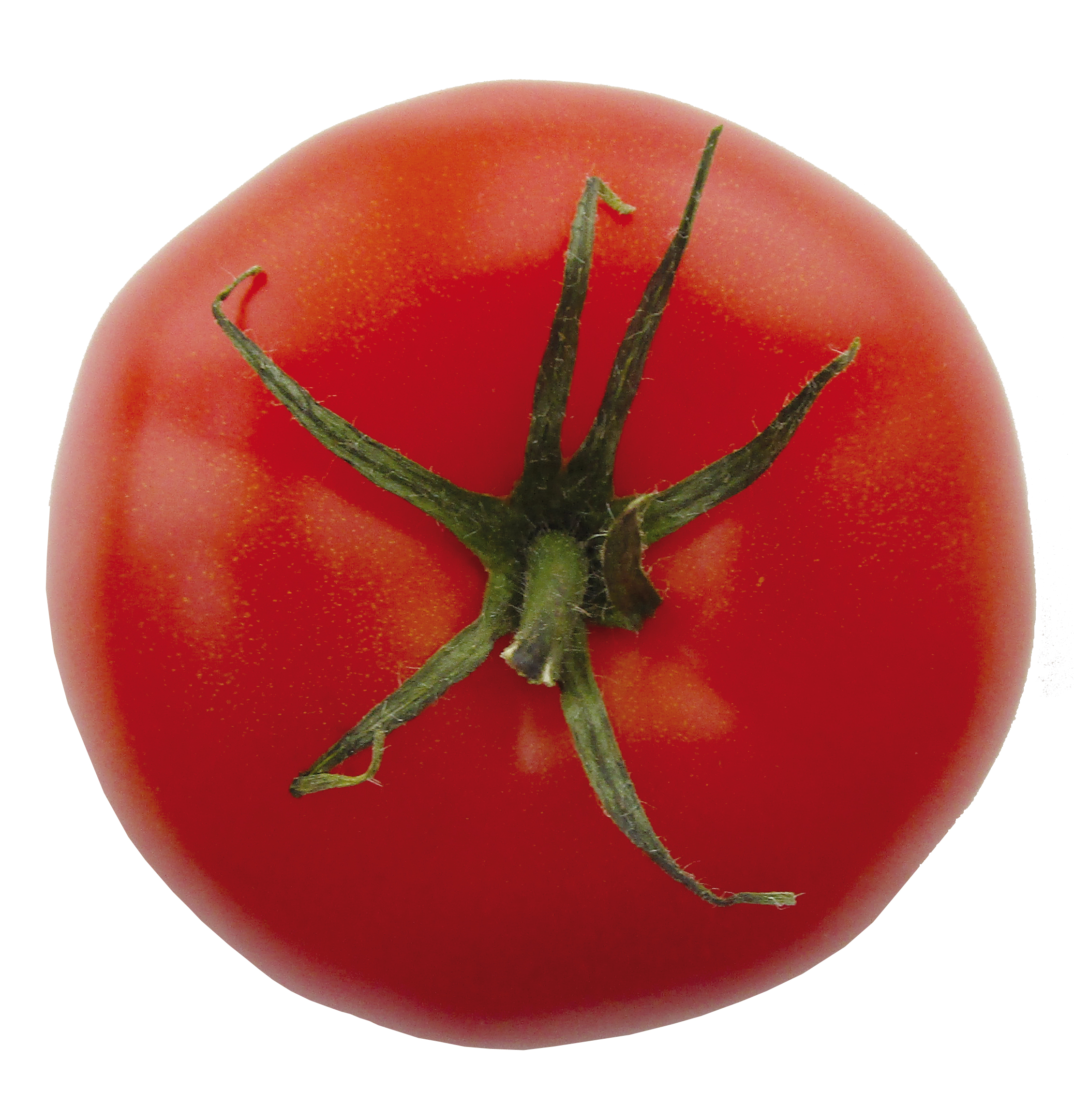 tomate-ronde